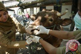 Pemerintah pastikan hewan kurban aman dari penyakit