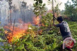 Pembakaran Lahan HST Meluas