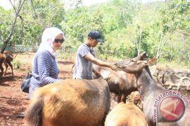 Rusa Sambar  Bertahan di Penangkaran Pertamina Tanjung