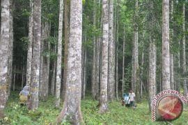 Hutan Kalsel Masuk Kerja Sama Indonesia-Finlandia