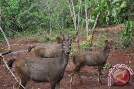 A Deer Dies, 2 Kilogram Trash in Stomach