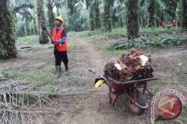 Ratusan pekerja sawit BRI Kotabaru tuntut gaji