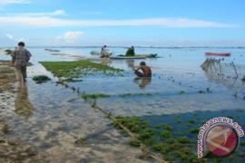 Nelayan Harapkan Kepastian Pasar Rumput Laut