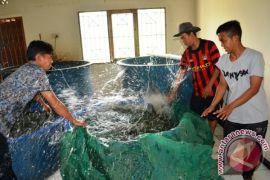 Target Balai Benih Ikan Gunung Manau Diturunkan
