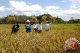 Pertamina continues to guide organic rice cultivation