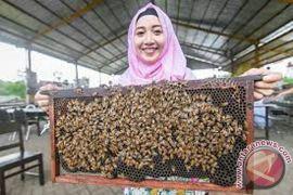 Peternak Lebah Kewalahan Penuhi Permintaan