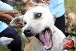 DKP3 Imbau Waspada Serangan Hewan Penular Rabies