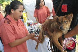 DKP3 Banjarbaru Tangani Dua Kasus Positif Rabies