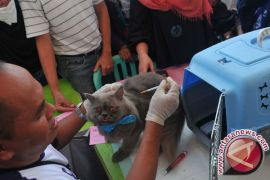 Tabalong targets 2,000 animals for rabies vaccination