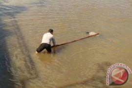 Satpolair Tangani Mayat Mengapung Di Sungai Martapura