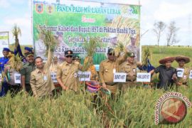 Govt Targets 86 Thousands Hectares Rice Plant in Tapin