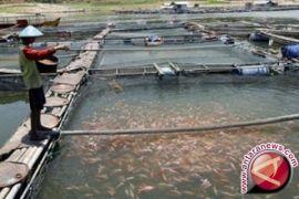 Pemkab Tapin Bangun Sentral Pengembangan Ikan Lokal