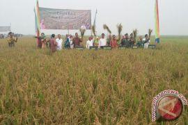 Targetkan Luas Tanam Padi 86 ribu Hektare