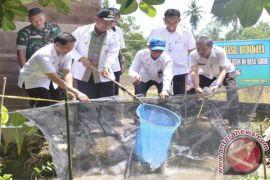 Bupati HSS Panen Ikan Papuyu