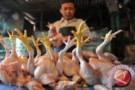 Disperindag: Kenaikan harga ayam dampak kenaikan pakan