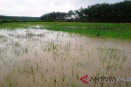 HSU Society Not Consume Local Rice