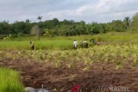 BRG gandeng dai se-Kalimantan bantu lindungi gambut