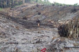 Kalsel rehabilitasi lahan kritis seluas 200 hektare