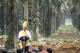 Peremajaan Sawit Tingkatkan Kesejahteraan Rakyat