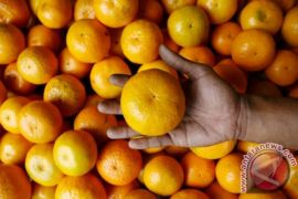 Studi: satu jeruk sehari pelihara daya pandang