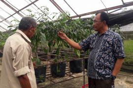 Kebun Hidroponik Pertamina Tanjung  Kembangkan Pupuk Organik