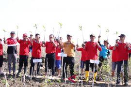 Gubernur canangkan penanaman 20 ribu mangrove