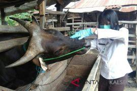 Disnakbun Banjar sosialisasi klinik kesejahteraan hewan