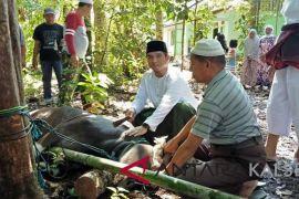 Akhmad Fahmi serahkan hewan kurban di Masjid Al Mujahidin