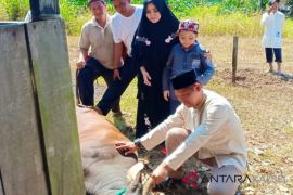 Polres HST berkurban sapi dan kambing