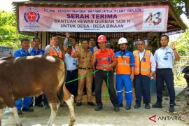 Indocement bagikan 31 sapi kurban