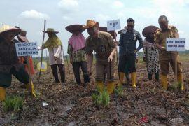 Tingkatkan luas tanam, HST lakukan gerakan tanam padi daerah rawa