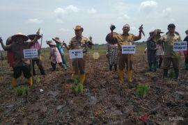 Realisasi luas tanam lahan pertanian di HST sudah 59.678 Hektar