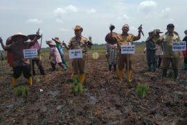 Distan HST optimalkan lahan rawa