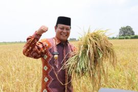 Pemprov  maksimalkan pertanian lahan lebak