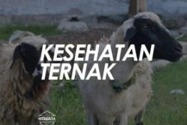 Raperda kesehatan hewan ternak Banjarmasin diapresiasi Kementan