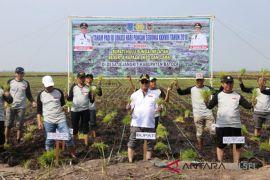 Optimalisasi lahan rawa mampu tingkatkan swasembada beras