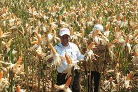 Mentan : Rawa wujudkan Indonesia lumbung pangan 2045