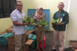 Astra Group send thousands bananas to HPS for a MURI record
