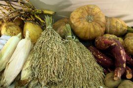 Jejangkit potensial jadi lumbung pangan