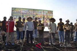 Realisasi tanam padi di Tapin meningkat 8.097 Hektare