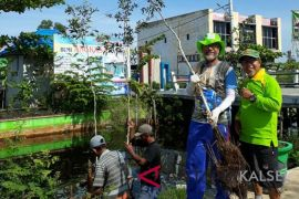 Tree care society plant 300 galam to green Trans Kalimantan