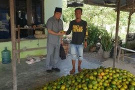 Perkebunan jeruk Batola Kalsel cukup menjanjikan