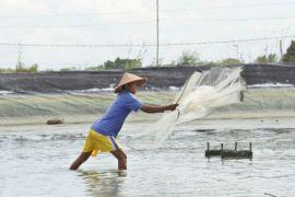 Pertamina-Perindo fasilitasi program kemitraan untuk 514 petambak udang