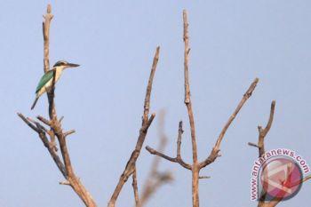 Kerusakan habitat ancam populasi burung air