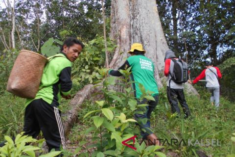Balitbanghut Teliti Pohon Lahung