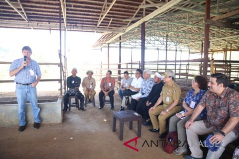 Kedutaan Australia kunjungi pembiakan sapi potong