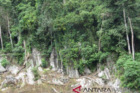 150 desa di Kotabaru masuk kawasan hutan