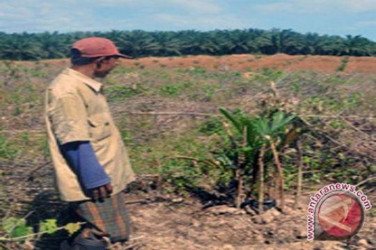 Pendapatan petani sawit Rp1,2 juta-Rp2,8 juta/ha