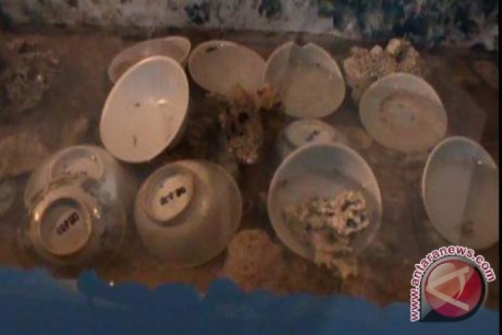 Ekspedisi Khatulistiwa Temukan Keramik Kuno
