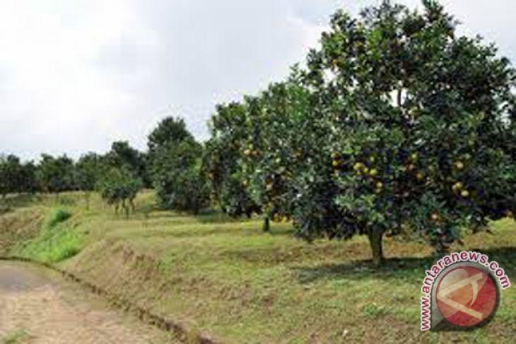Agrowisata Bi Ih Kalsel Antara News Kalimantan Selatan